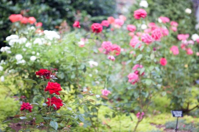 Botanical-Gardens-01
