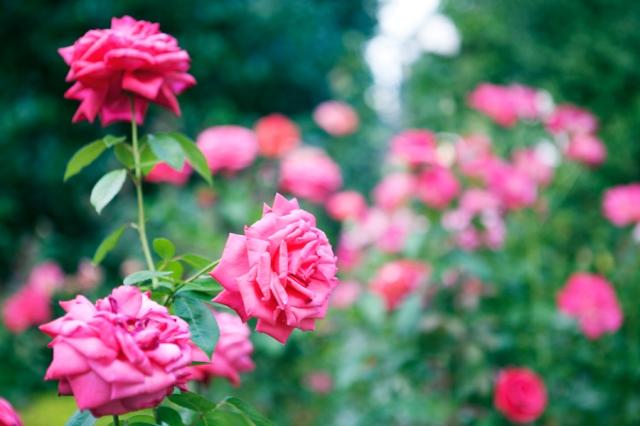 Botanical-Gardens-02