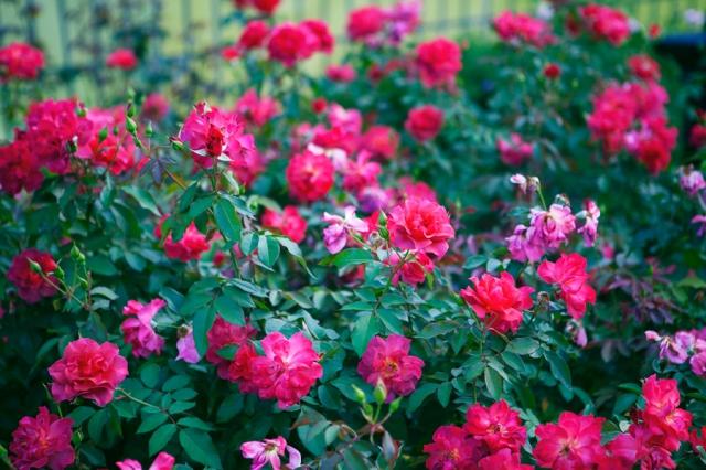 Botanical-Gardens-04