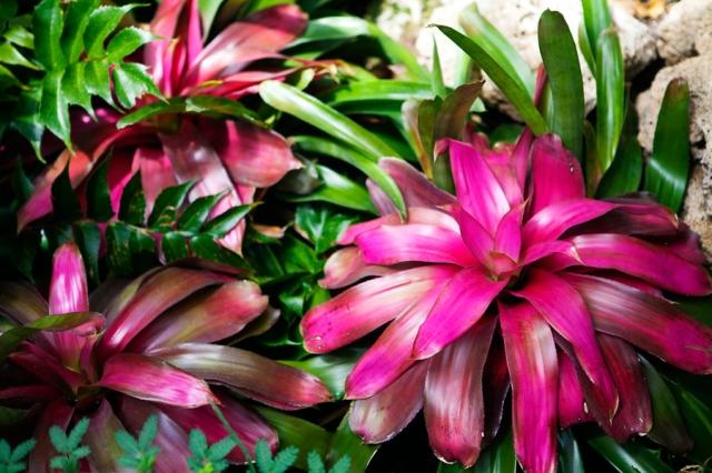 Botanical-Gardens-06