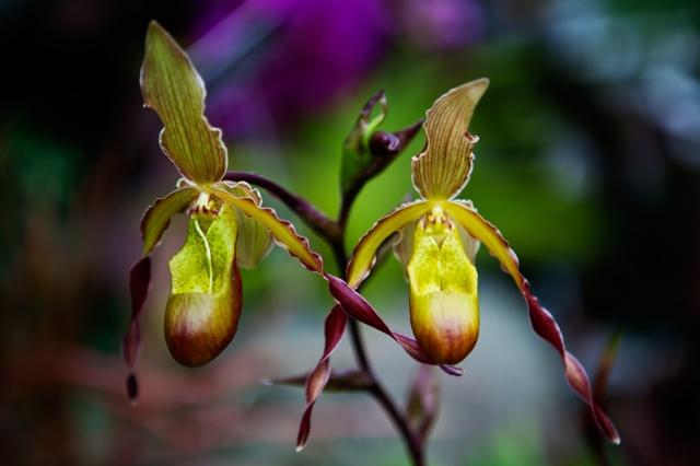 Botanical-Gardens-12