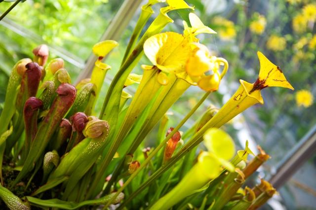 Botanical-Gardens-13