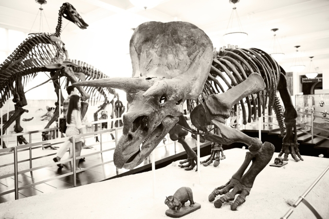 Museum-of-Natural-History-13