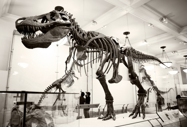Museum-of-Natural-History-14