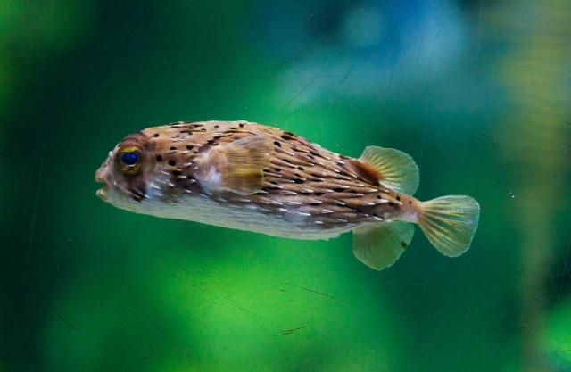 Shedd-Aquarium-01