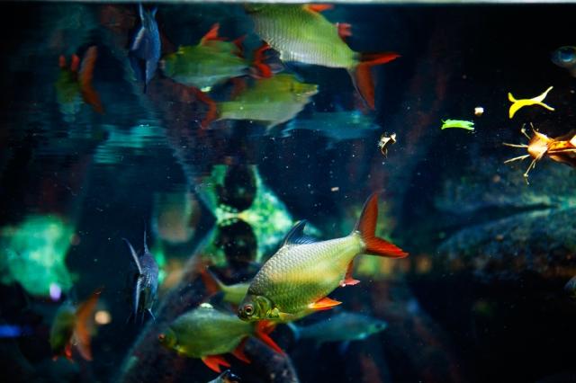 Shedd-Aquarium-03
