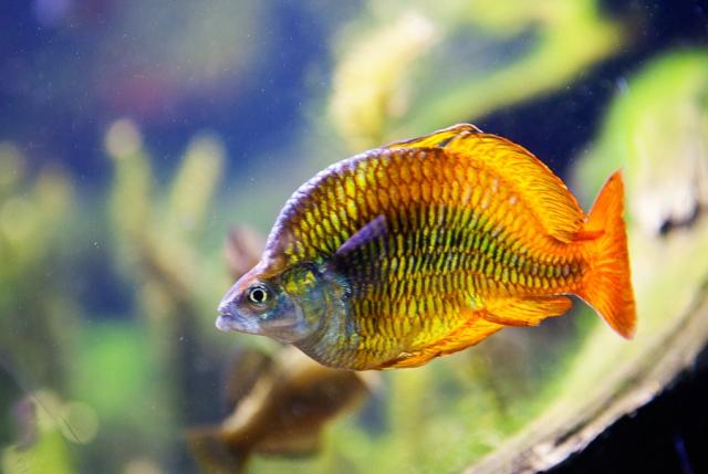 Shedd-Aquarium-04