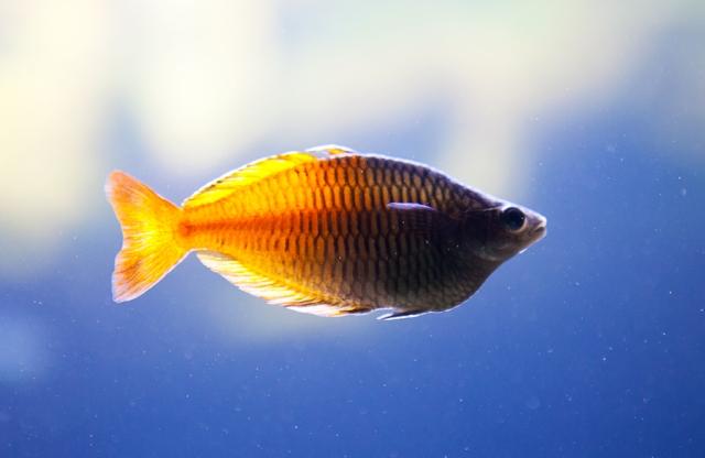 Shedd-Aquarium-05