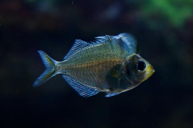 Shedd-Aquarium-06