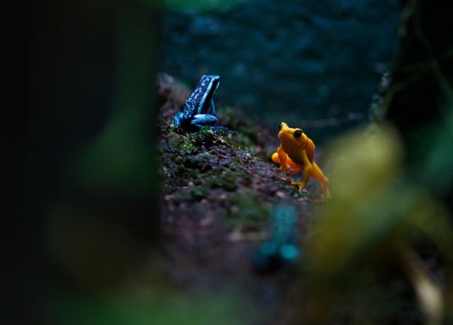 Shedd-Aquarium-08