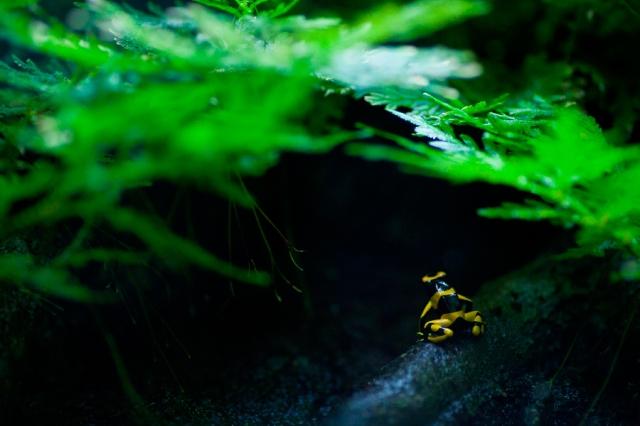 Shedd-Aquarium-11