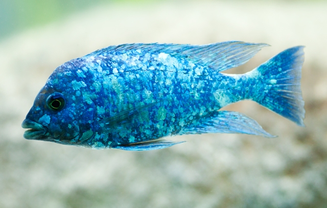 Shedd-Aquarium-12