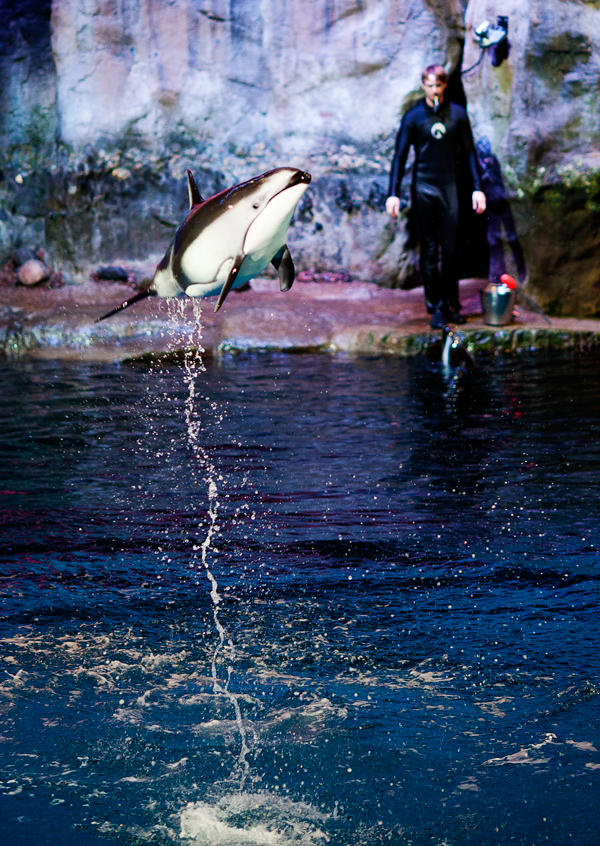 Shedd-Aquarium-14