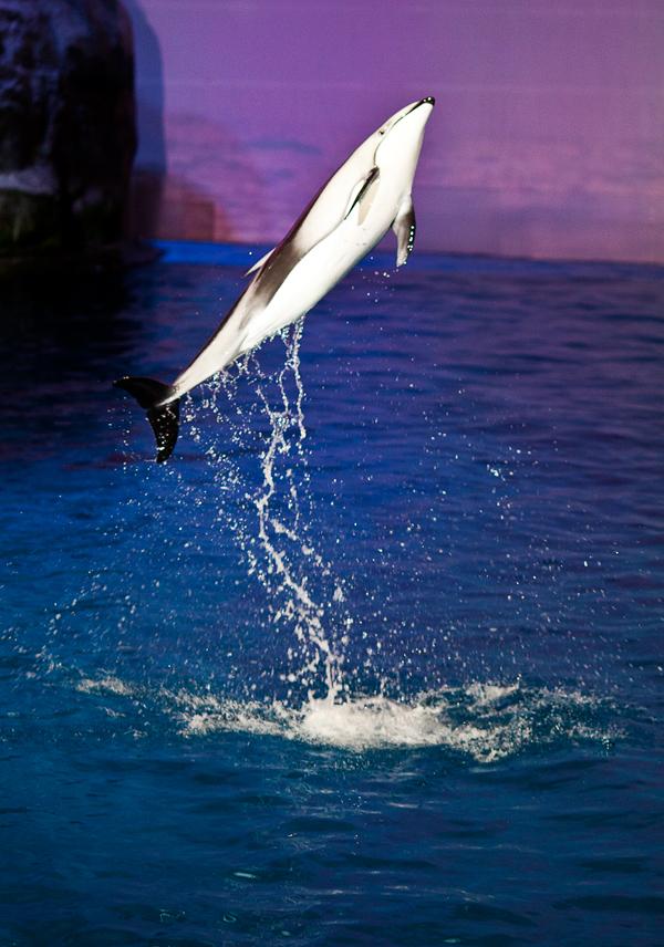 Shedd-Aquarium-15
