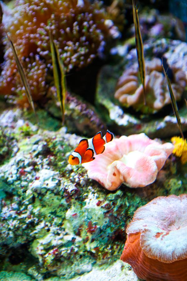 Shedd-Aquarium-18