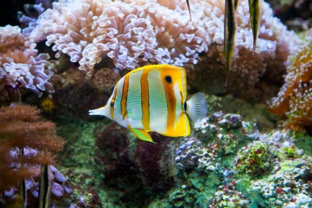 Shedd-Aquarium-19