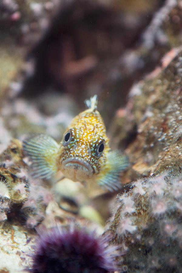 Shedd-Aquarium-21