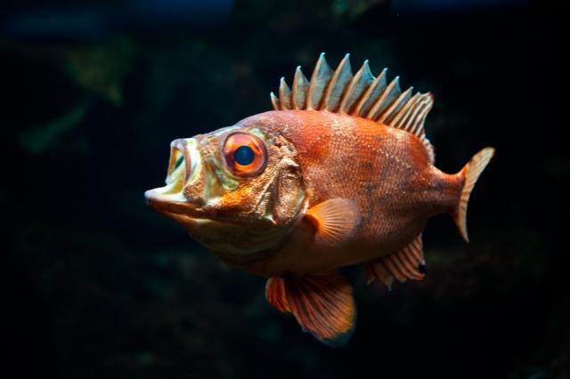 Shedd-Aquarium-22