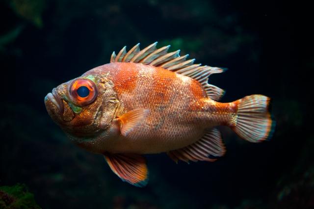 Shedd-Aquarium-23