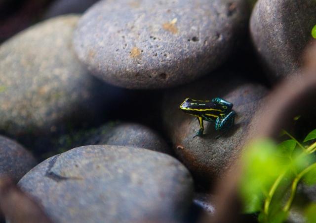 Shedd-Aquarium-26