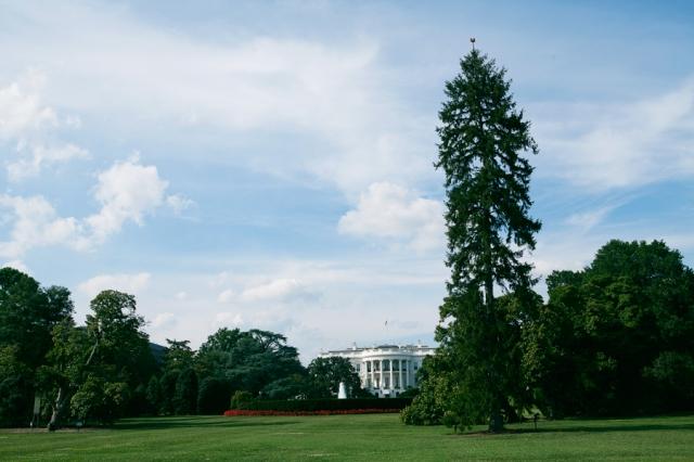 Washington-DC-56-The-White-House