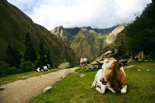 Inca-Trail---Camino-Inca-18