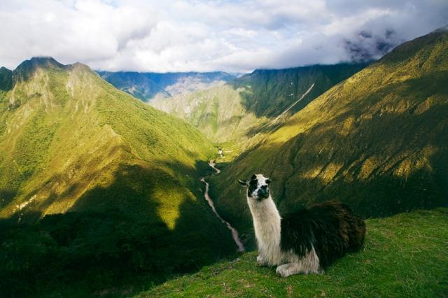 Inca-Trail---Camino-Inca-56