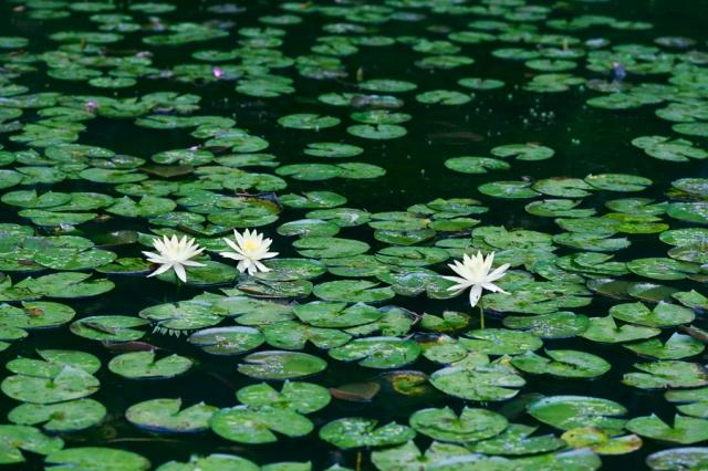 Jardim-Botânico-SP-01