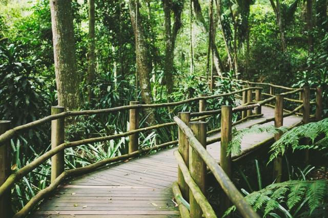 Jardim-Botânico-SP-04