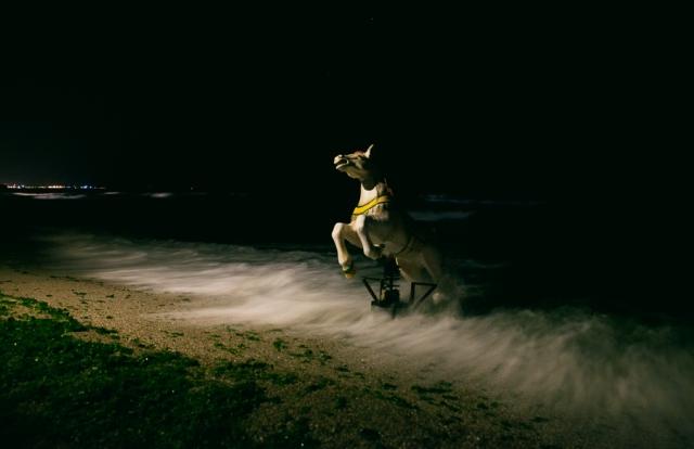 Seahorse-03