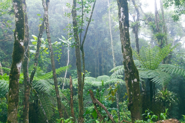 rain-forest-alright