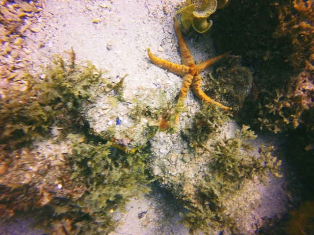 Arraial-do-Cabo-13-mergulho-03