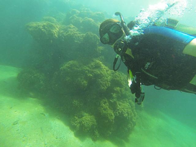 Open Water Diver Porto de Galinhas Porto Point 05